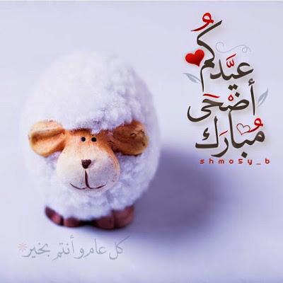 خلفيات عيد الاضحى خروف