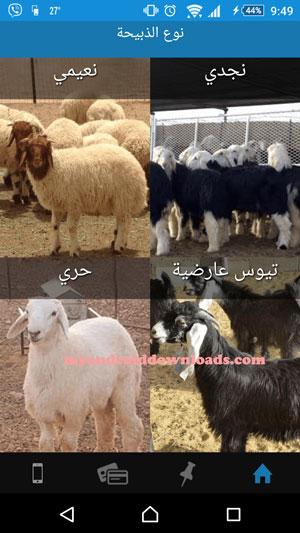 تحميل تطبيق مواشي للاندرويد Livestock برنامج سوق الحلال عربي 2016 - عرض لانواع المواشي من خلال تنزيل تطبيق مواشي للاندرويد