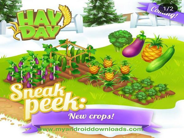 محاصيل جديدة في هاي داي التحديث القادم